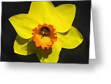 Flower - Id 16235-220251-6209 Greeting Card