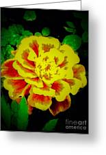 Flower In Abstract With Black Background Greeting Card