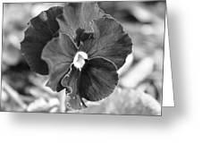 Flower In Garden Greeting Card