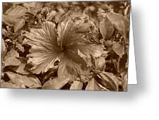 Flower In Sepia Greeting Card