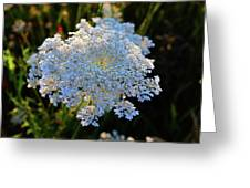 Flower In The Field  Greeting Card