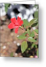 Flower In The Garden Greeting Card