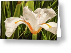 Flower In The Grass Greeting Card