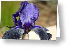 Flower In The Rain At Chelsea Greeting Card
