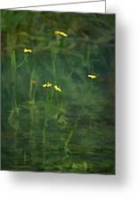 Flower In The Stream - Digital Art Greeting Card