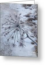 Flower In Winter Greeting Card