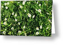 Flower Kissed Fields Greeting Card