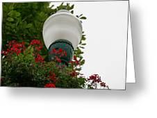 Flower Light  Greeting Card
