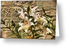 Flower - Lily - White Lily Greeting Card