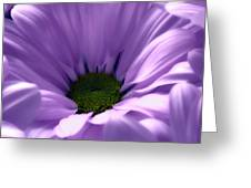 Flower Macro Beauty 4 Greeting Card