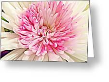 Flower Macro. Greeting Card