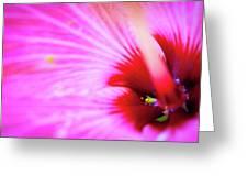 Flower Macro Greeting Card