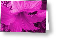 Flower Maddness Greeting Card