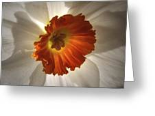 Flower Narcissus Greeting Card