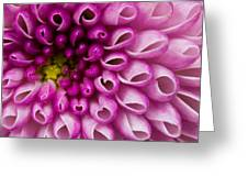 Flower No. 4 Greeting Card