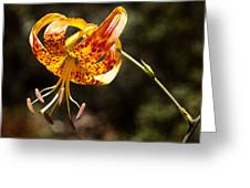 Flower Of Beauty Greeting Card