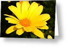 Flower Of Sunshine Greeting Card