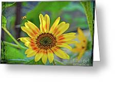 Flower Of The Sun Greeting Card