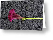 Flower On The Street Greeting Card
