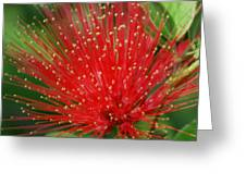 Flower Optics 3 Greeting Card
