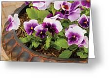 Flower - Pansy - Purple Pansies Greeting Card