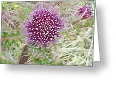Flower Photograph Greeting Card