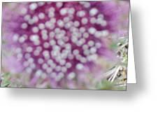Flower Photograph2  Greeting Card