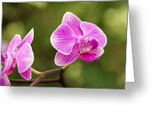 Flower - Pink Orchids Greeting Card