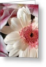 Flower Pink-white Greeting Card