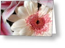Flower Pink-white Greeting Card