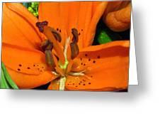 Flower Pistil Greeting Card