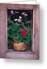Flower Pot In Window Greeting Card