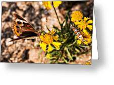 Flower Power Bug And Butterfly Greeting Card