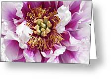Flower Power In Pink Greeting Card