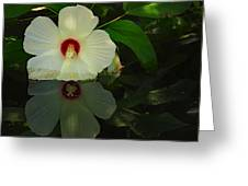 Flower Reflection Greeting Card