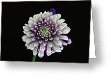 Flower Rhythm 1 Greeting Card