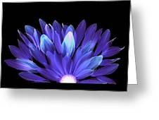 Flower Rise - Purple On Black Greeting Card