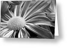 Flower Run Through It Black And White Greeting Card
