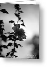 Flower Silhouette Greeting Card