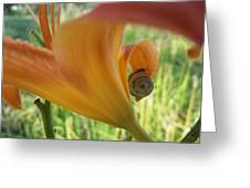 Flower Snail On An Orange Lily Greeting Card