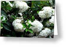 Flower Snow Balls Greeting Card