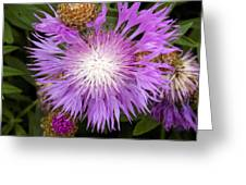 Flower Snowflake Greeting Card