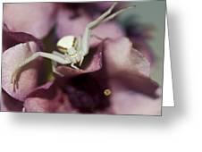 Flower Spider Greeting Card