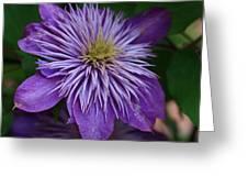 Flower Splash Greeting Card