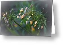 Flower Spray Greeting Card