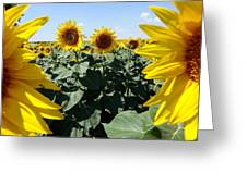 Flower Sunflower,yellow Flower, Greeting Card