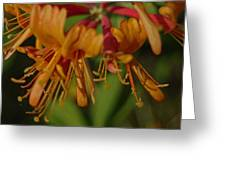 Flower Tongues Greeting Card