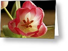 Flower Tulip Greeting Card