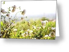 Flower Valley Greeting Card