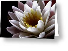 Flower Waterlily Greeting Card